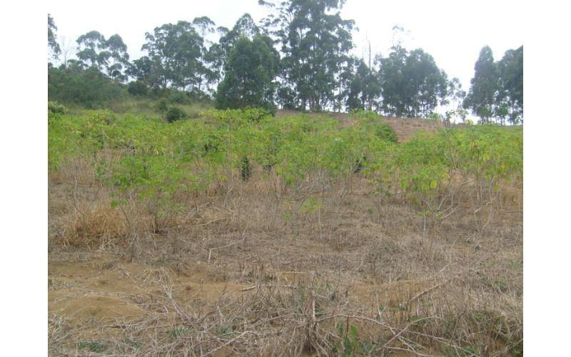 ULTIMAS FOTOS MARÇO 2012 063