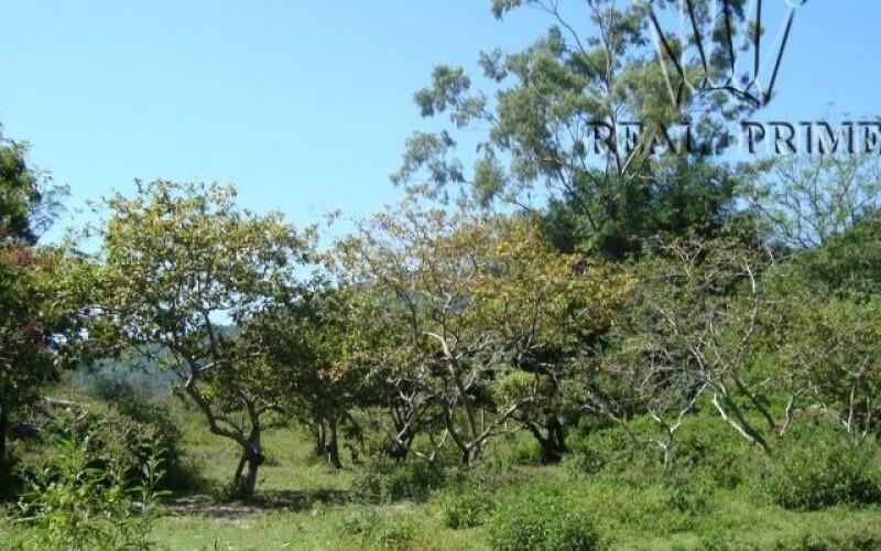 Terreno / Sítio em Bairro Nobre - Foto 11