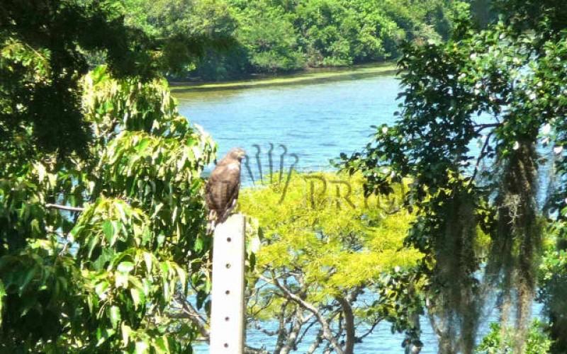 Linda Propriedade á Venda na Lagoa da Conceição - Foto 3