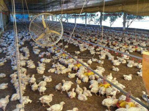 Fazenda produtiva à venda em Campo Verde MT