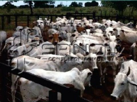 Fazenda com 37.800 hectares em Cocalinho MT