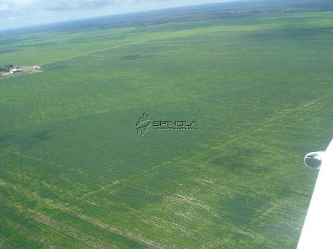 Linda Fazenda de 10 mil Hectares em Peixes-TO para lavoura ou pecuária!
