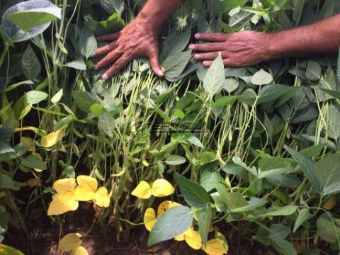 Fazenda com 6.580 hectares em Cocalinho MT